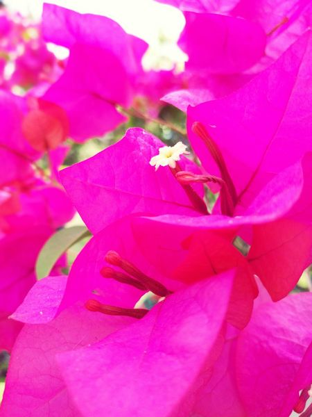 Flower Pink Color Beauty In Nature Close-up No People Outdoors Nature
