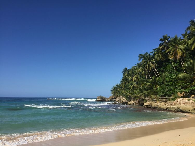 Beach Beauty In Nature Clear Sky Day Dominican Republic Holiday Holidays Nature No People Outdoors Palm Palm Tree Palm Trees Sand Scenics Sea Sky Tranquility Travel Travel Destinations Vacations Vacations Water Wave