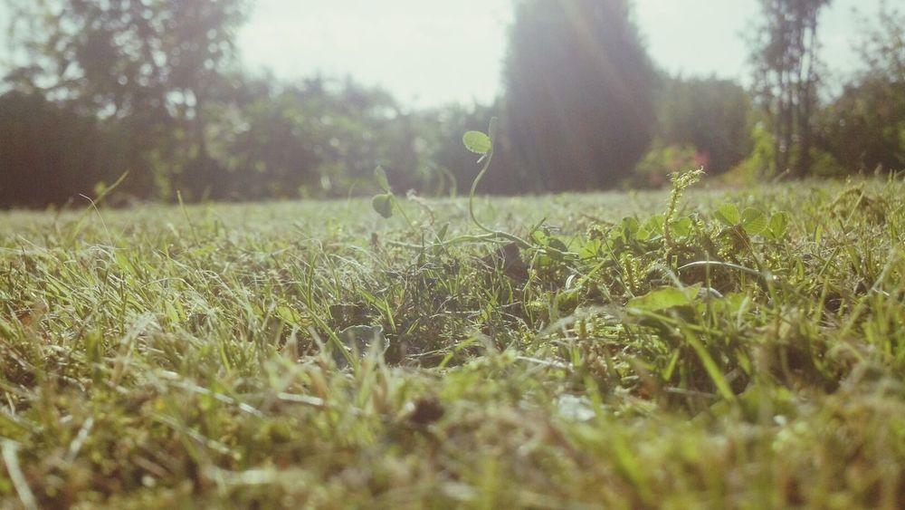 Garten Summertime Paradise Nature