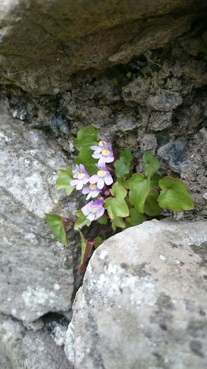 Flowers Nature Stone Wall