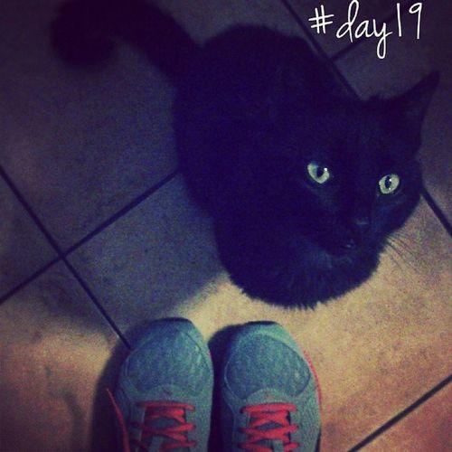 Let's go! 100happydays Day19 Cat Cats blackcat pet petoftheday instamood instadaily jj igersItalia igersAbruzzo igersteramo picoftheday pettherapy photooftheday running footing sport fitness