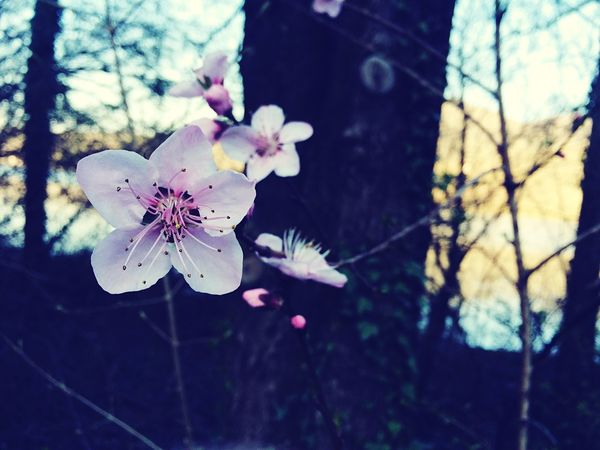 OpenEdit EyeEm Nature Lover Colors Flowers Pink Spring Getting Inspired