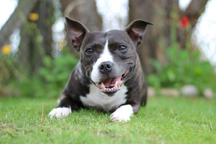 my little tia Doggie First Eyeem Photo