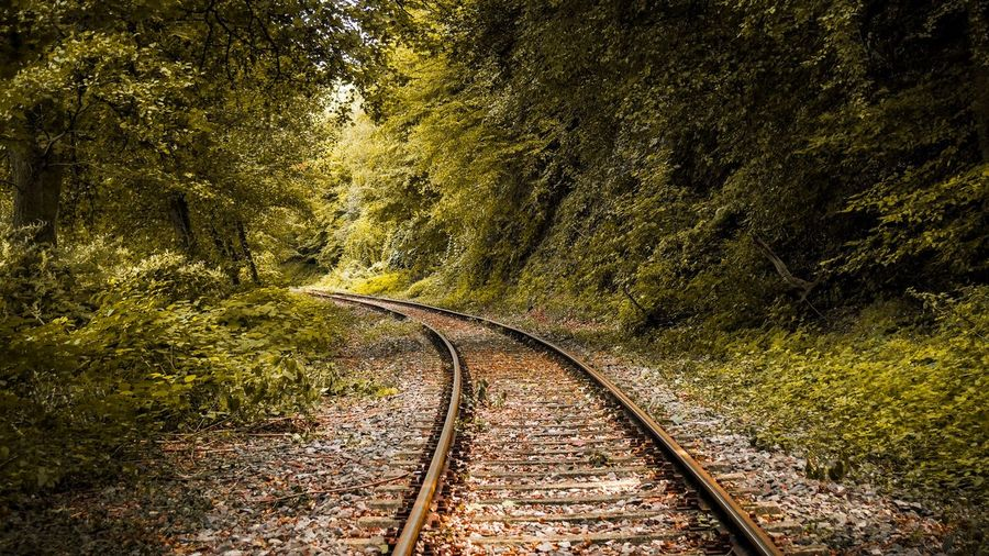 Nature No People Tree Plant Sunlight High Angle View Day Outdoors Full Frame Textured  Shadow Track Railroad Track Field Land Beauty In Nature A New Beginning