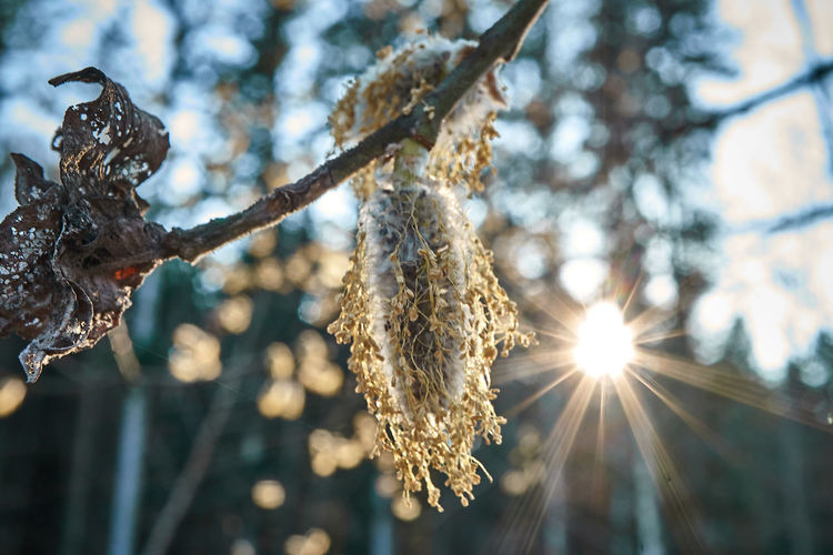 https://youtu.be/OsyjglmndZc Plant Tree Focus On Foreground Cold Temperature Winter Nature Sunlight Beauty In Nature Close-up Day Frozen No People Snow Branch Ice Growth Lens Flare Tranquility Low Angle View Outdoors Icicle First Eyeem Photo EyeEm Best Shots Eyem Gallery My Best Photo