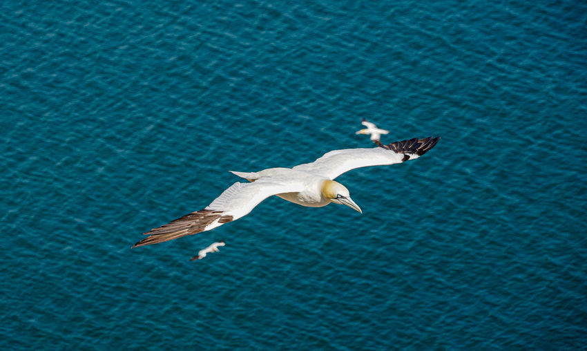 High angle view of seagull flying over swimming pool