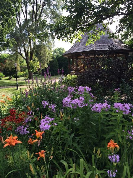 Abundance Beauty In Nature Blooming Botany Change Day Flower Fragility Freshness Gazebo At The Park Growing Growth Nature No People Outdoors Park Park - Man Made Space Plant