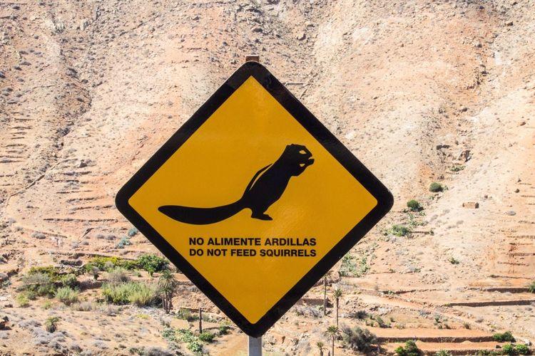 Fütterungsverbot Fütterung  Verboten Hinweisschild Schild Ardilla Hörnchen Atlashörnchen Squirrel Animals Animales Tiere Blindar Indirecta Prohibición Alimentacion Do Not Feed No Alimente Shield Note Ban
