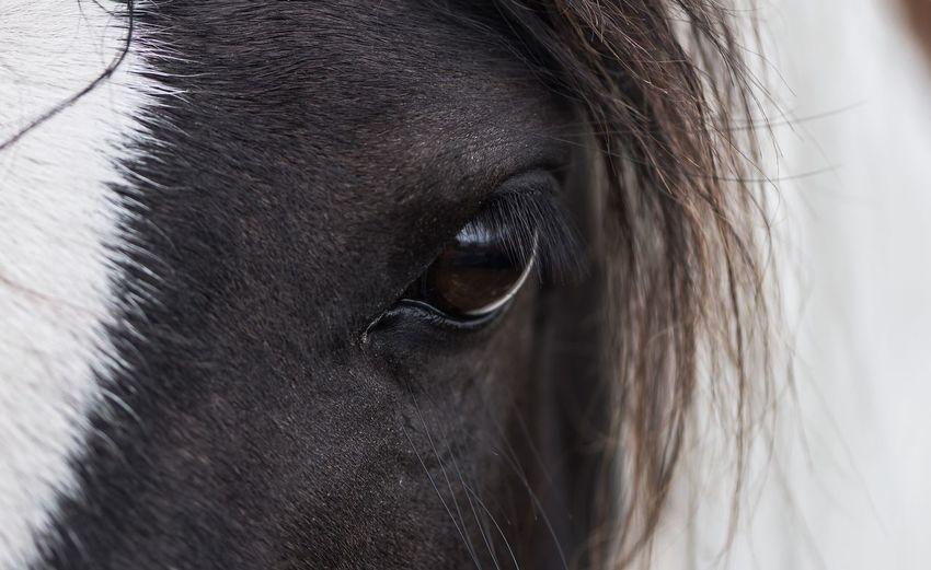 Horse Wild Pony