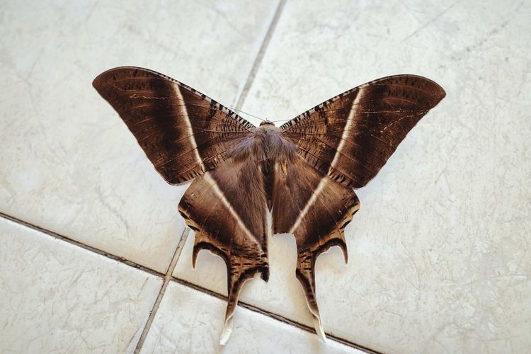 High angle view of butterfly on floor