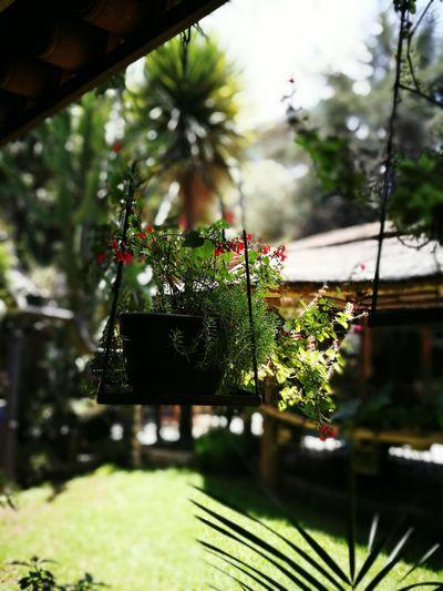 Greenhouse No