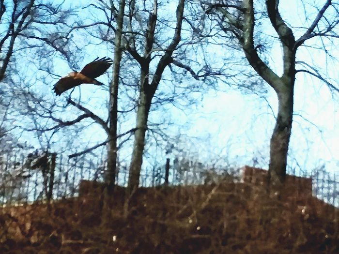 Pulled out my phone got lucky with this quick shot Hawk Nature