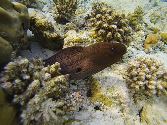Underwater Animals In The Wild Coral Fish UnderSea Sea Life Water Swimming Snorkeling Maldives Biyadhooislandresort Gopro Hero3black Amazing Colors Sub Cressi Picoftheday IGDaily Igers All_shots Followme EyeEm Team Swag Travel