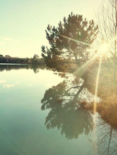 Suivons La Lumière.... Tree Reflection Lake Nature Sky Water Scenics
