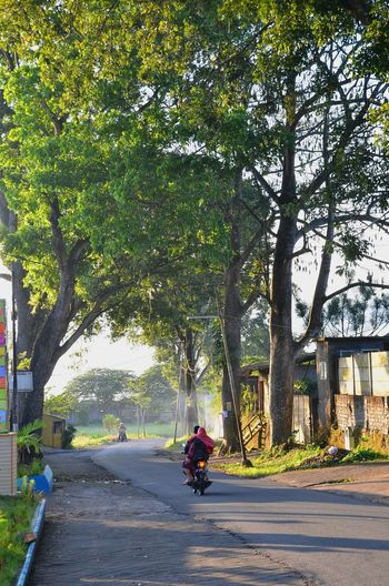morning ride Village Kampung Pagi Morning INDONESIA Indonesia Photography  Indonesia_allshots Indonesian Photographers Collection Malang Nikon Nikonphotography Nikonphotographer Nikon D7000 Village Life Tree Transportation Motorcycle Day Outdoors People Road