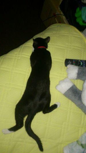 おはぎさん Cat 寝姿かわいい !