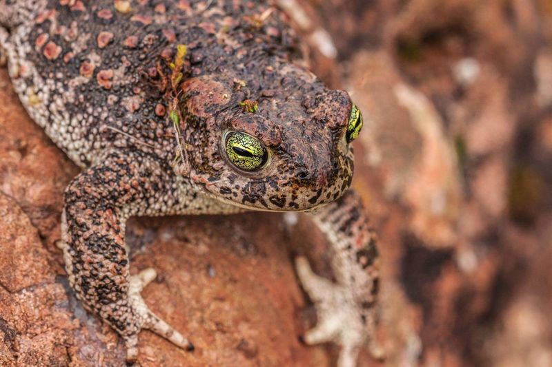 Animal Wildlife Reptile Frog Animals In The Wild Animal One Animal Nature No People Day Close-up Animal Themes Portrait Outdoors
