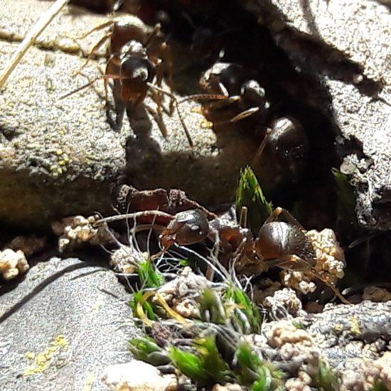Ants Ants At Work Insects  Eyeym Animals Eyeem Insects EyeEm EyeEm Gallery Eyeemphotography Germany 🇩🇪 Deutschland Hirschberg ınstagram @siggis_encounters Outdoors Day Nature