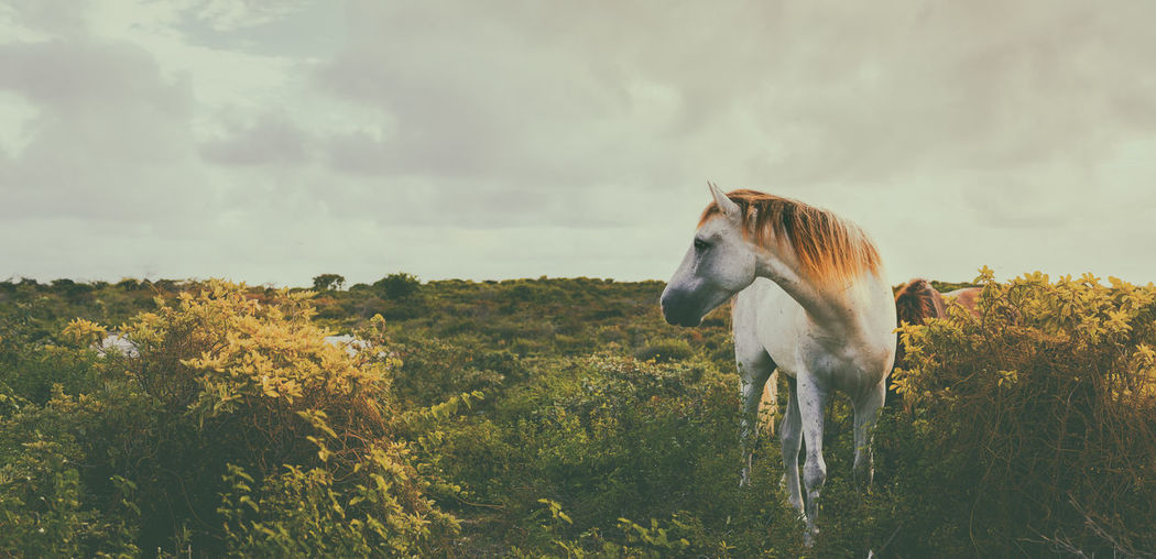 🐴the grass is greener🐎~ Tranquility Standing Travel Destinations Turksandcaicos Paradise Grandturk Outdoors Beauty In Nature Nature Hiscreation Animal Themes Horse Mamals The Great Outdoors - 2017 EyeEm Awards