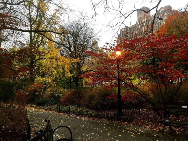 My Favorite Place Central Park Nature Peace Beautiful