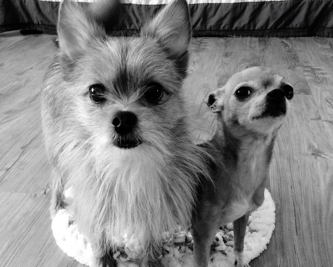 Domestic Animals Dog Animal Themes Pets Mobsterstyle Cute Pets Cute♡ Zoology IPhoneography Bestfriend Bestbuddies