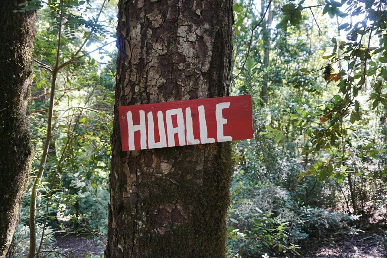 tree trunk, tree, text, danger, no people, day, red, nature, forest, outdoors, communication, growth, close-up