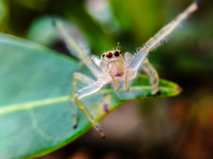 Macro Spider Nature Animal Themes Close-up Nature Day Spider Jumping Spider Beauty In Nature Plant Outdoors EyeEm Selects