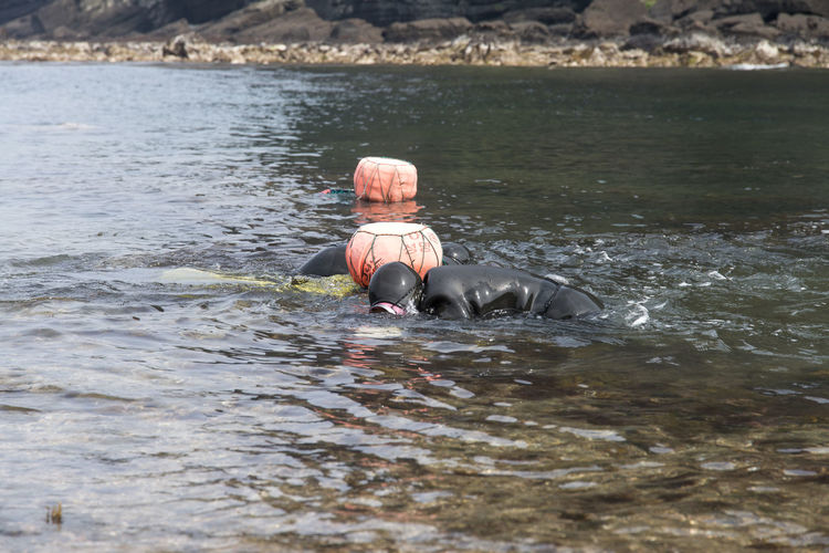 haenyeo who is a female diver picking up sea weed and sea food Beauty In Nature Bird Day Female Diving Duck Haenyeo Hippopotamus JEJU ISLAND  Lake Mammal Nature No People One Animal Outdoors Sea Seaside Swimming Water Waterfront