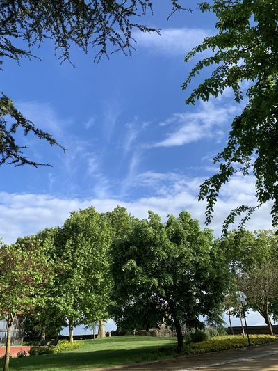 Low angle view of trees in park against sky