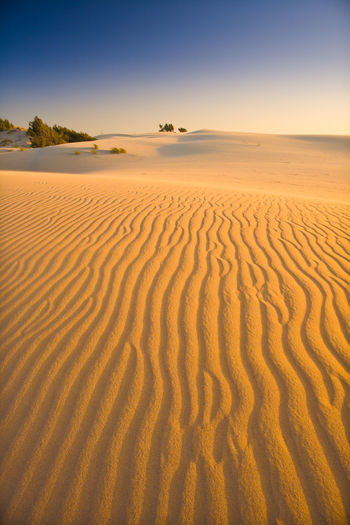 Sardinia, Italy Colors Composition Desert Dunes LINE Lines Arid Climate Backgrounds Beauty In Nature Climate Day Desert Deserto Environment Land Landscape Nature No People Non-urban Scene Outdoors Pattern Remote Sand Sand Dune Scenics - Nature Semi-arid Sky Sunset Tranquil Scene Tranquility