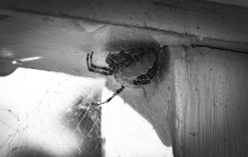 Arachnid Arachnophobia B&w Back Light Black And White Photography Bugs Day Detail Full Length High Angle View Insects  Intricate Lifestyles Nature Photography Naturelovers Shadow Spider Spider Web Spiders Sunshine The Essence Of Summer Maximum ClosenessWall Web Wet