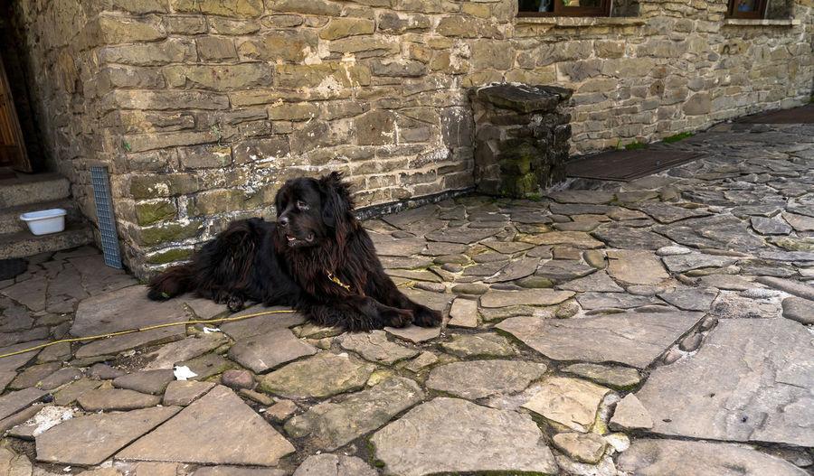High angle view of dog on wall