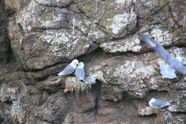Seagulls Cliffs