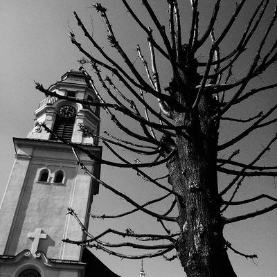 Church Tree Black And White