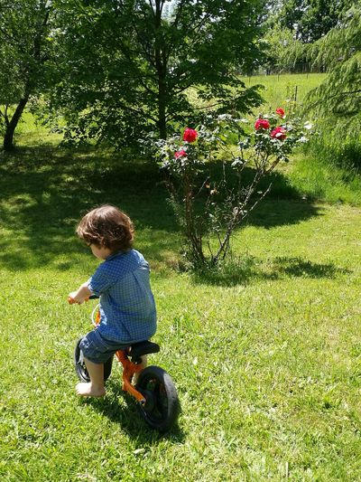 Rear view of boy riding bicycle on grassy field during sunny day
