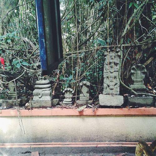 Nagadaivangal Mannarashala Kaav