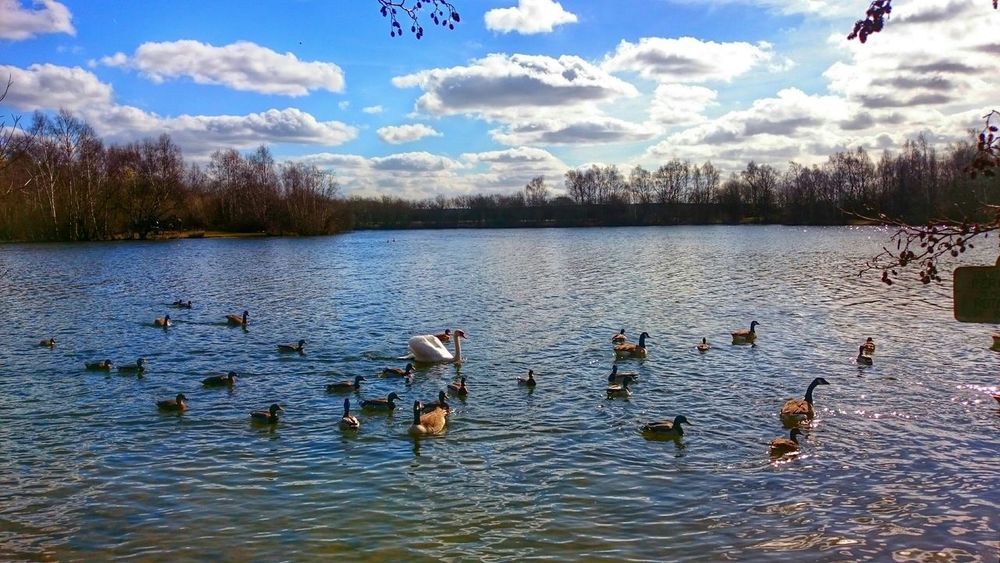 Duck's and Swans at Daneshill Lake on a Cold but Sunny day