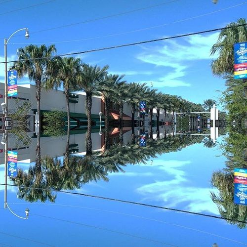 Mirror fun looking north to Bal Harbour at Harding & 95th in Surfside, Miami 📷 on ZTE Axon Florida Miami Beach Bal Harbour Miamibeach Miami, FL Mirror Picture Mirror Palm Trees USA Outdoors Balharbour Streetphotography Blue Sky Surfside Beach Surfside