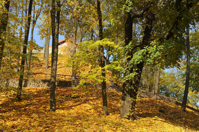 Vilnius Tree Plant Forest Land Autumn Beauty In Nature Growth Tree Trunk Trunk Sunlight Tranquility Nature Tranquil Scene Scenics - Nature WoodLand Day Landscape Change Non-urban Scene Outdoors Autumn Collection Fall Vilnius Old Town Gediminas Tower
