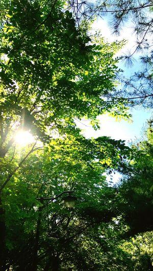 seoul,summer Seoul Summer First Eyeem Photo