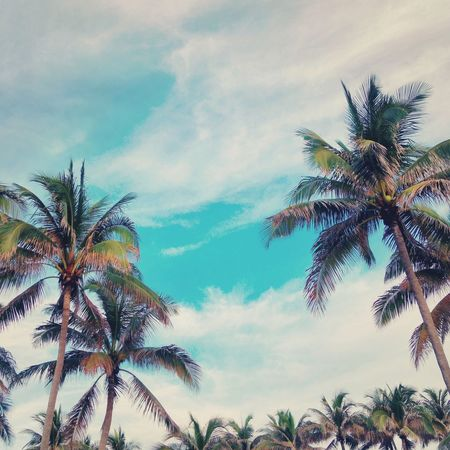 Palm Trees Fine Art Photography Clouds And Sky Whispy Clouds Blue Sky