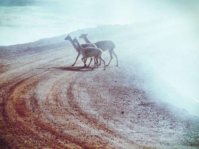 Horse in pen against sky