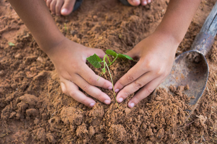Close-Up Of Hands Planting Seedling