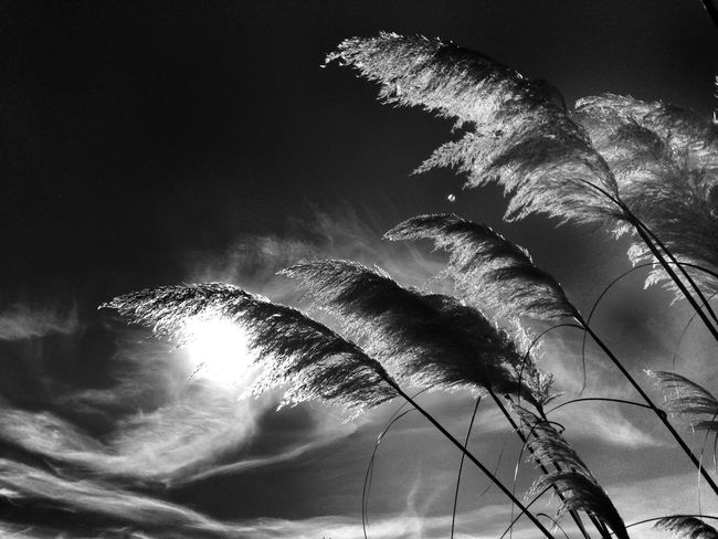 Autumn sunshine :) EyeEm Best Shots Bw_collection Sky_collection Nature_collection