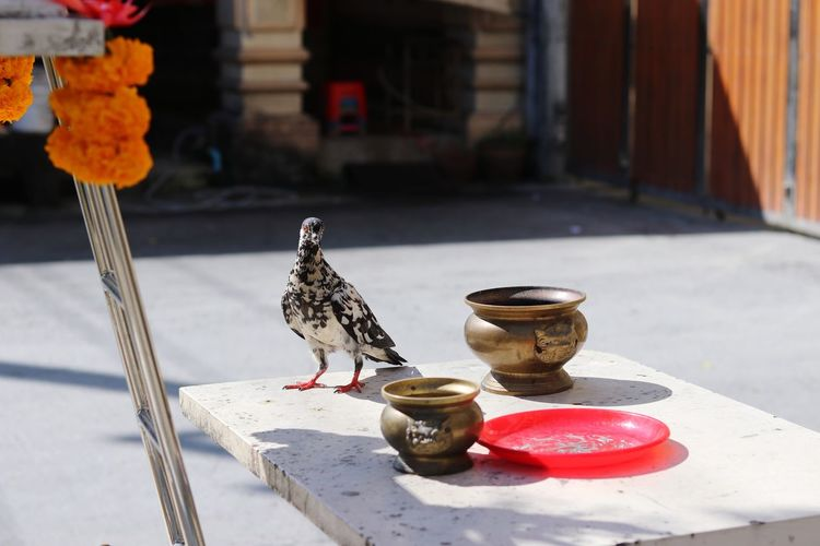 View of birds perching on table