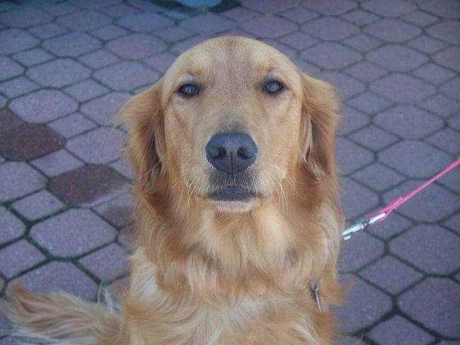 Meet Biscuit. Dogportrait Itsabeautifulworld