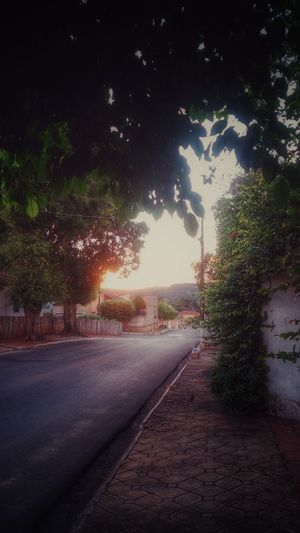 Nature Everywhere Street Photography View Sunset Background Asphalt Leavesporn Nature On Your Doorstep Sidewalk Hello World Check This Out Taking Photos Hanging Out Walking Around The City  Sunset_collection Urban Nature Inspired By Beauty