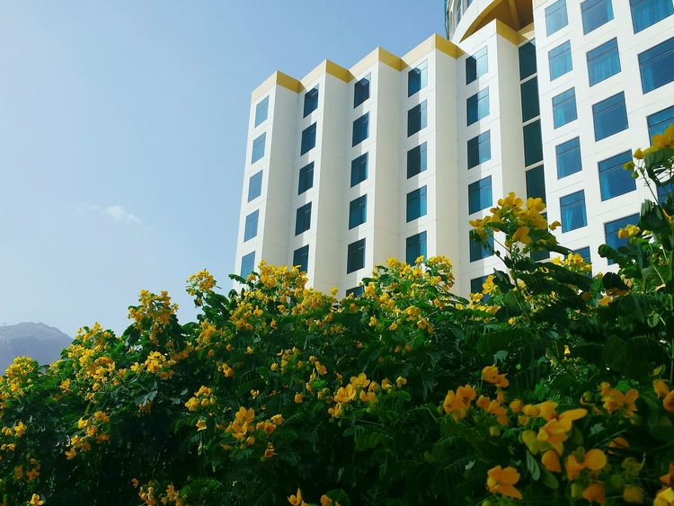 Yellow No People Architecture Building Exterior Outdoors Sky Nature Flowering Bushes Hotel Fassaden Architektur Fassade Bushes And Trees Bushes And Flowers Beliebte Fotos 3XSPUnity Ladyphotographerofthemonth Growth In Bloom Windows Khor Fakkan Seaside Town Hotel View Hotels And Resorts Adapted To The City POV