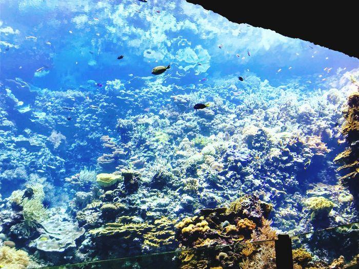 Under water calm Water Sea Life Fish Underwater Nature Blue Swimming First Eyeem Photo