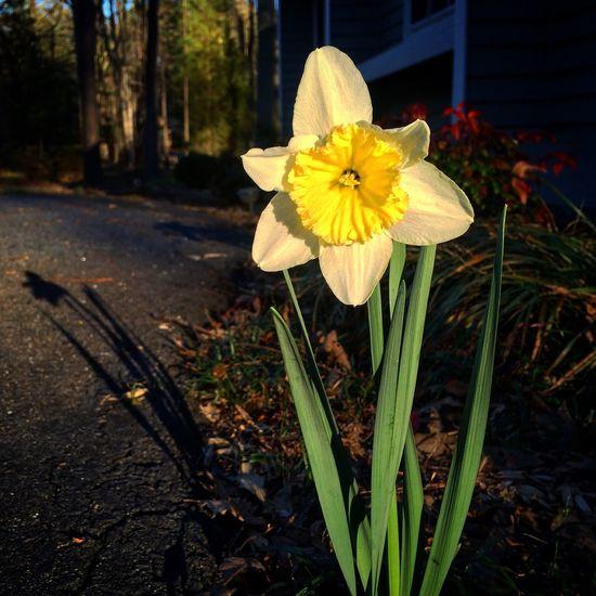 BeautifulBlooms Springhassprung Meandmyshadow MakingUpForLostTime ImSorryINeglectedEyeEm March2016